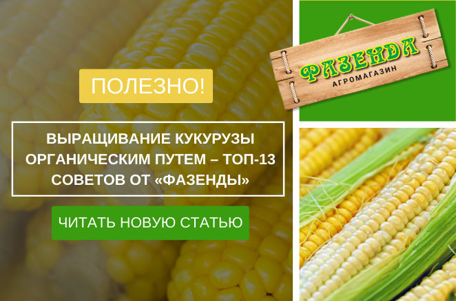 Выращивание кукурузы органическим путем – ТОП-13 советов от «ФАЗЕНДЫ»