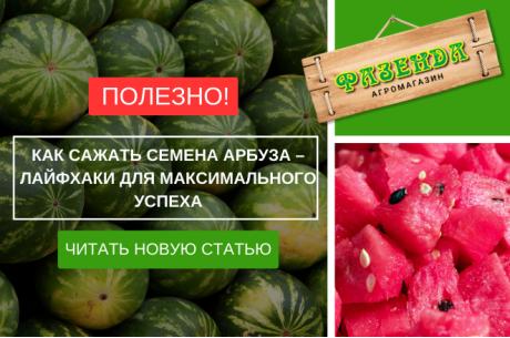 Как сажать семена арбуза – лайфхаки для максимального успеха