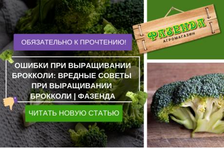 Ошибки при выращивании брокколи