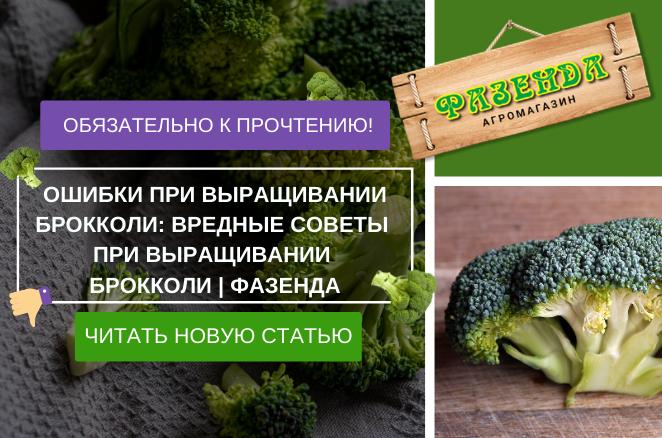 Ошибки при выращивании брокколи: вредные советы при выращивании брокколи | Фазенда