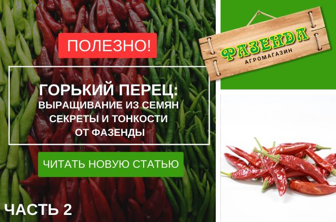 Гіркий перець: вирощування з насіння. Секрети і тонкощі від фазенди. Частина друга