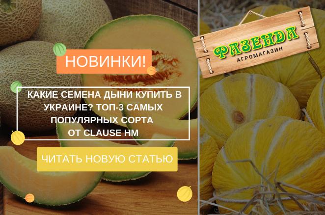 Какие семена дыни купить в Украине? ТОП-3 самых популярных сорта от Clause HM