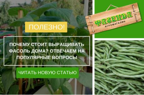 Почему стоит выращивать фасоль дома? Отвечаем на популярные вопросы