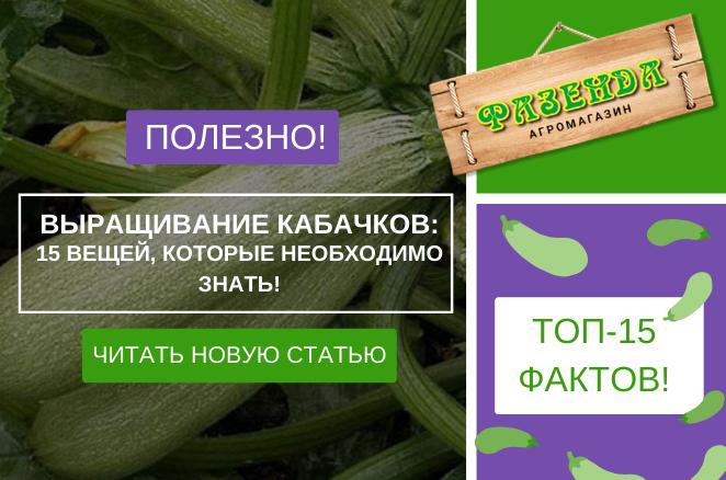 Выращивание кабачков – 15 вещей, которые необходимо знать!