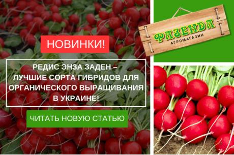 Редис Энза Заден – лучшие сорта гибридов для органического выращивания в Украине!