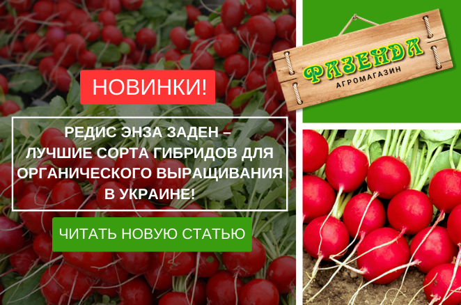 Редис Енза Заден - кращі сорти гібридів для органічного вирощування в Україні!