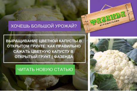 Выращивание цветной капусты в открытом грунте: как правильно сажать цветную капусту в открытый грунт | Фазенда