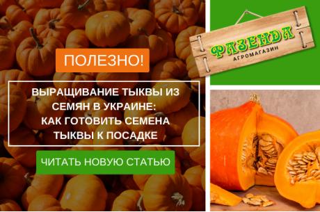 Выращивание тыквы из семян в Украине: как готовить семена тыквы к посадке
