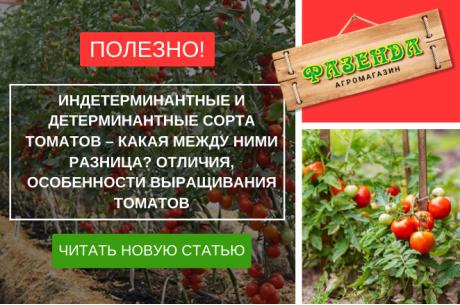 Индетерминантные и детерминантные сорта томатов – какая между ними разница? Отличия, особенности выращивания томатов