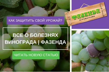 Все о болезнях винограда