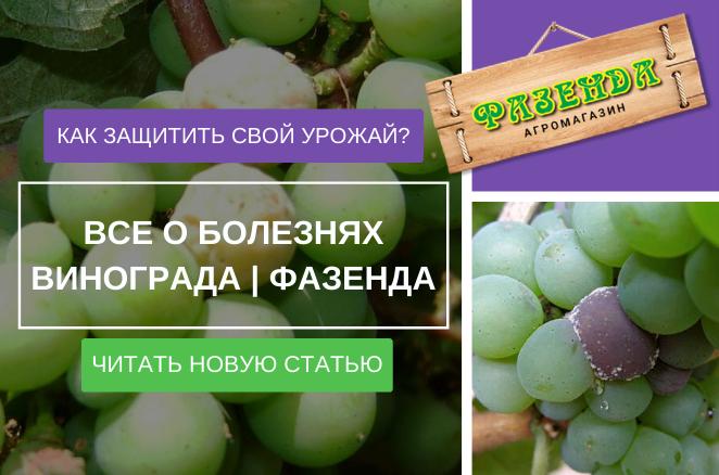 Все про хвороби винограду