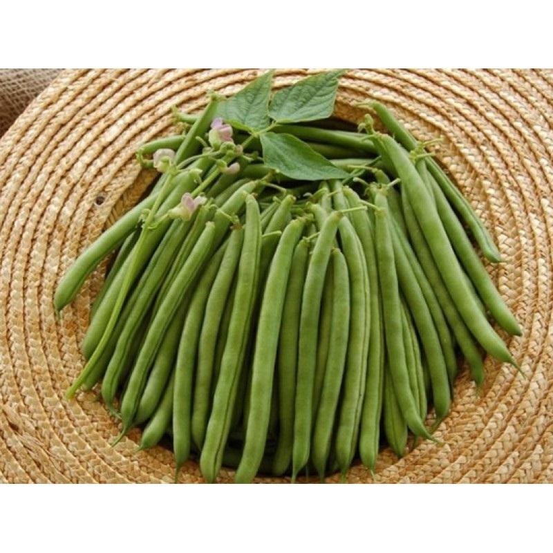 фасоль джина семена